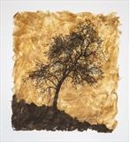 Fraxinus by Janet French, Artist Print