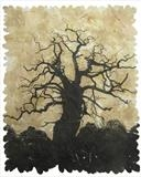 Quercus II by Janet French, Artist Print, Etching