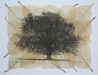 Janet French - The Narrative of Trees